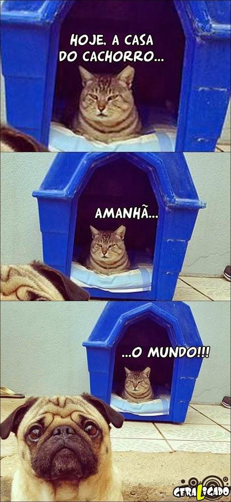 Gatos ainda vão dominar o mundo!