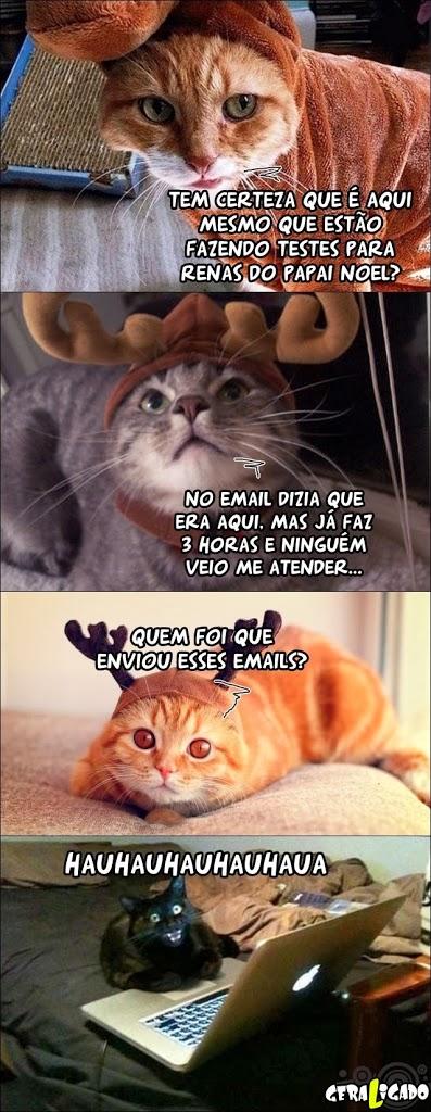 Gatos, nunca confie em gatos ...