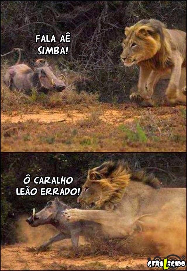 Opa, leão errado!