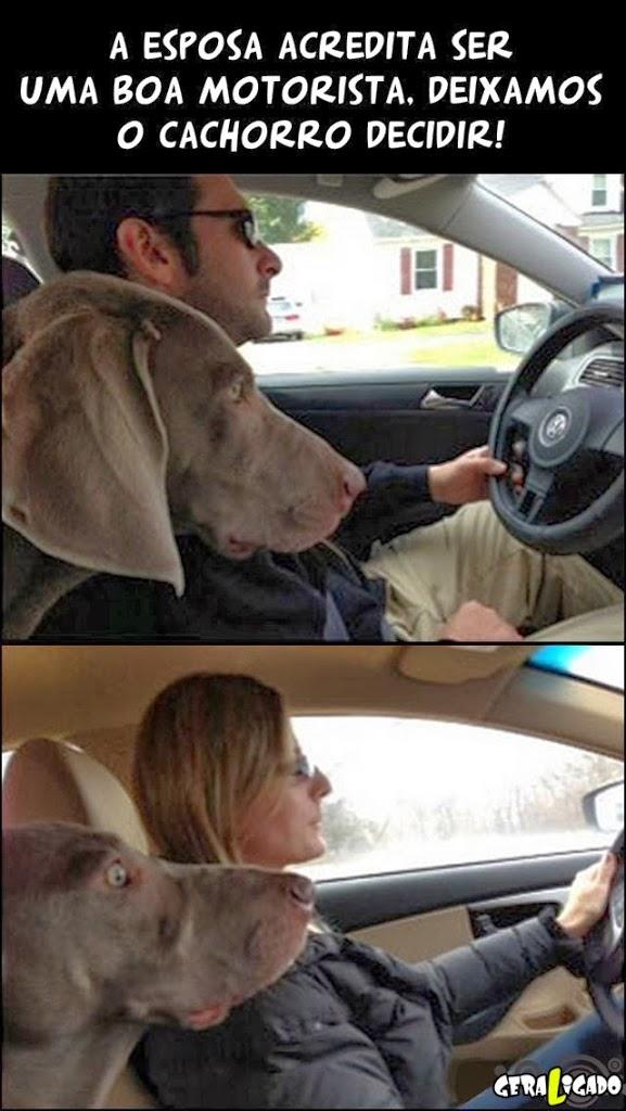 Reação do cachorro com homem e mulher dirigindo!