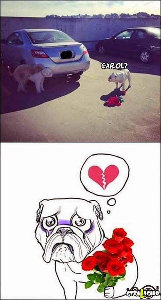 Nunca confie em cadelas!