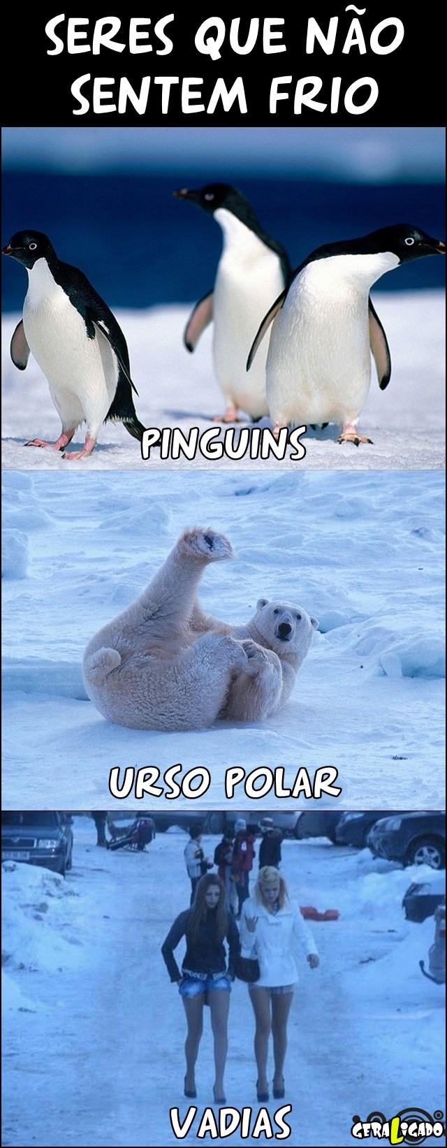 Seres que não sentem frio!
