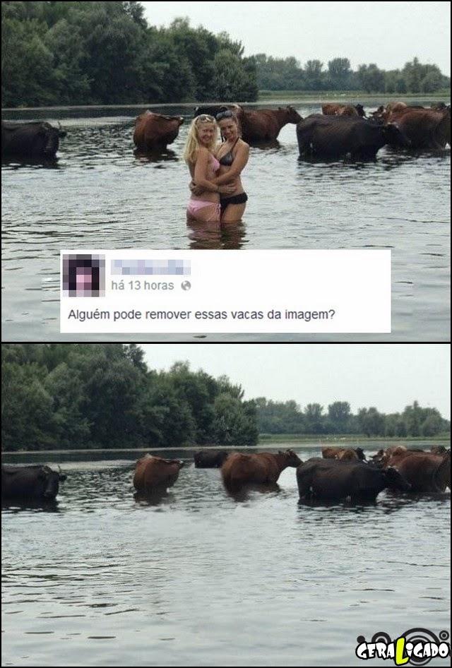 Tirando as vacas da foto