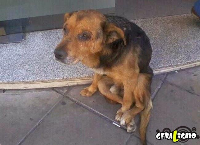 Imagens mostram o antes e depois de cães de rua que viviam na miséria após serem resgatados