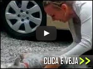 cachorro chora e desmaia de emocao ao rever dona apos 2 anos