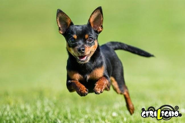 Conheça os cachorros mais caros do mundo