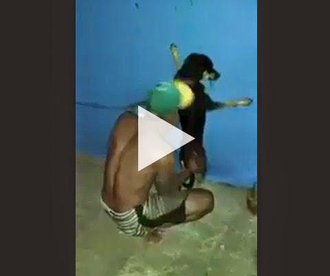 Vida de cachorro na favela não é facil!