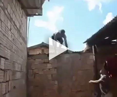 Pegar ladrão no telhado pode ser uma péssima ideia
