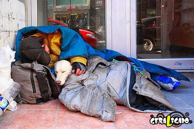 Cães e o amor por seus donos sempre em primeiro lugar
