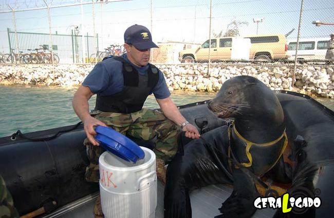 Animais que já foram usados em guerras