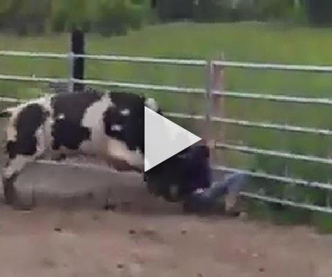 Foi tirar onda com o touro se deu mal!