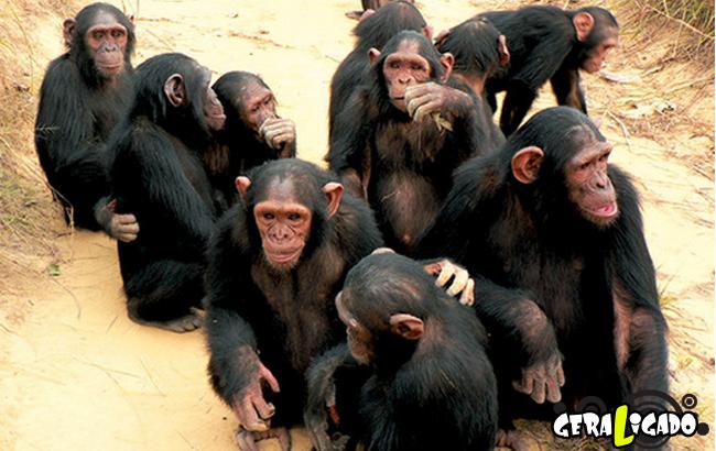 Os dez animais mais inteligentes do mundo