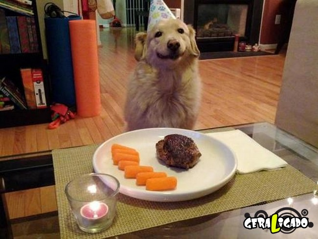 Animais de estimação comemoram aniversário com festas2