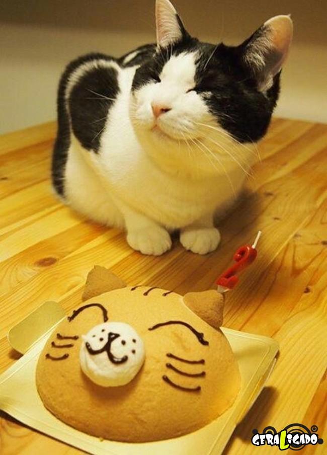 Animais de estimação comemoram aniversário com festas3