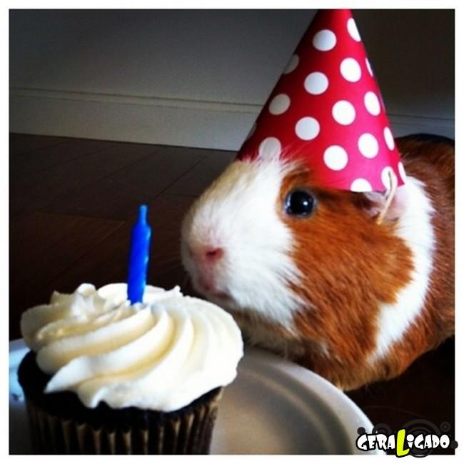 Animais de estimação comemoram aniversário com festas5