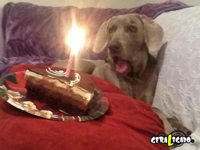 Animais de estimação comemoram aniversário com festas6