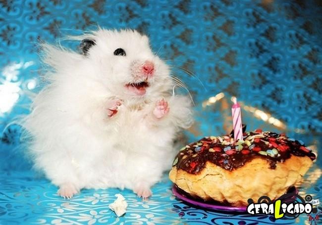 Animais de estimação comemoram aniversário com festas7