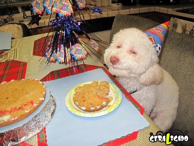 Animais de estimação comemoram aniversário com festas9