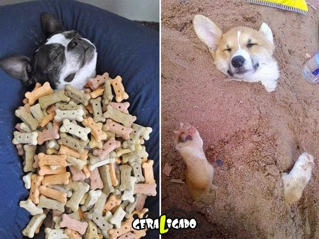 Animais que sabem como curtir a vida