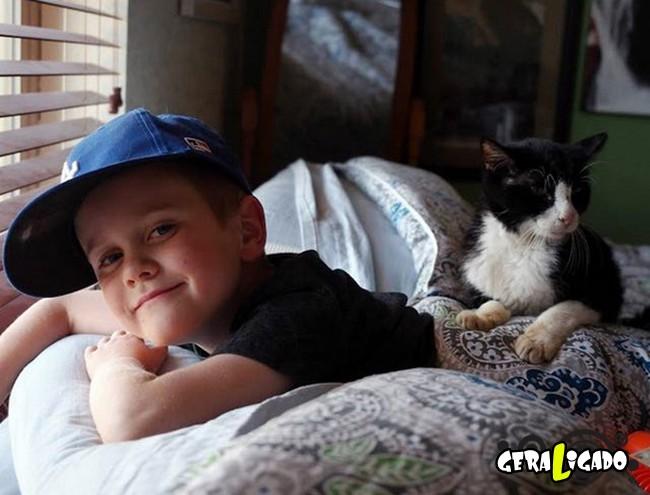 Nunca é tarde  demais para adotar um animal idoso1