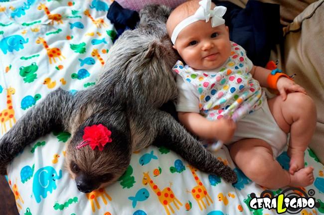 Uma amizade engraçada entre bebê e preguiça