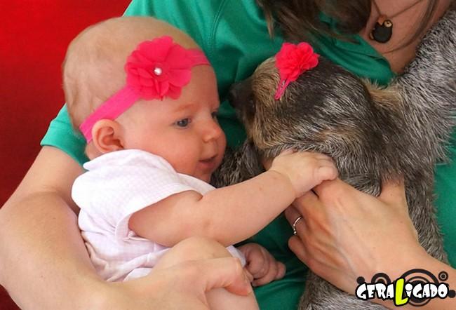 Uma amizade engraçada entre bebê e preguiça10