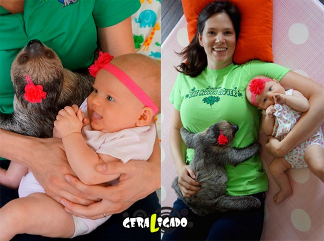 Uma amizade engraçada entre bebê e preguiça11