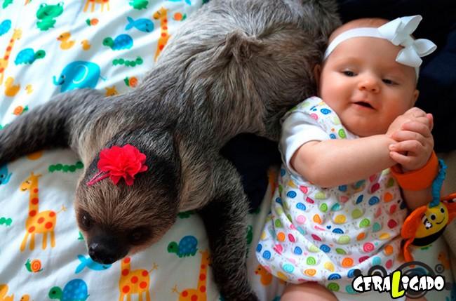 Uma amizade engraçada entre bebê e preguiça2