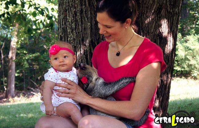Uma amizade engraçada entre bebê e preguiça3