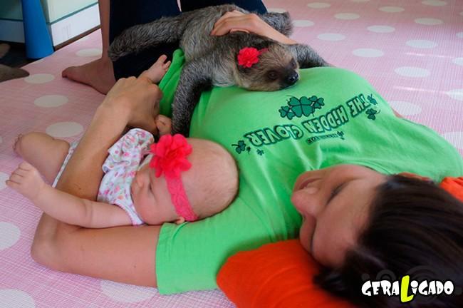 Uma amizade engraçada entre bebê e preguiça7