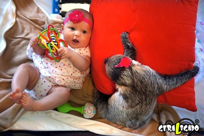 Uma amizade engraçada entre bebê e preguiça8