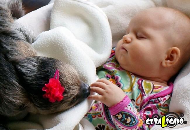 Uma amizade engraçada entre bebê e preguiça9