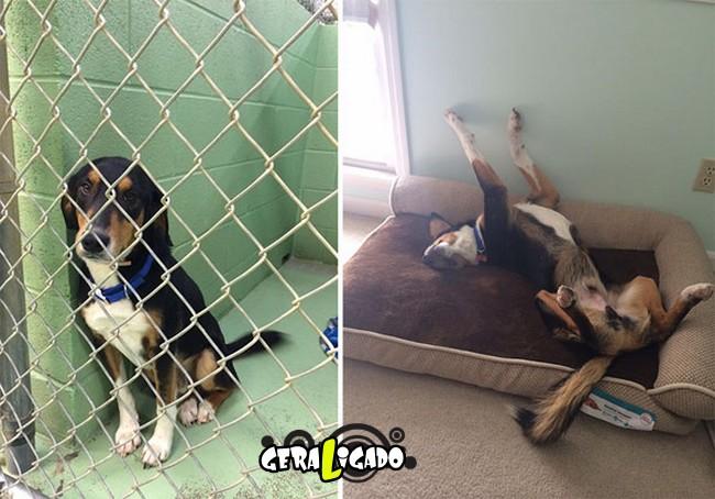 Animais antes e depois de serem adotados1