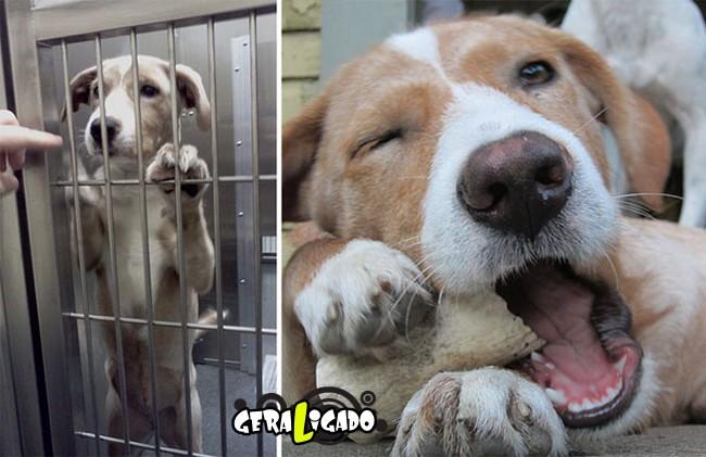 Animais antes e depois de serem adotados10