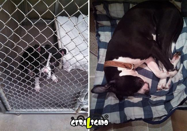 Animais antes e depois de serem adotados11