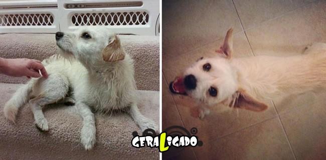 Animais antes e depois de serem adotados13