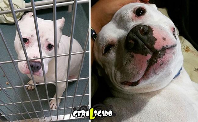 Animais antes e depois de serem adotados2