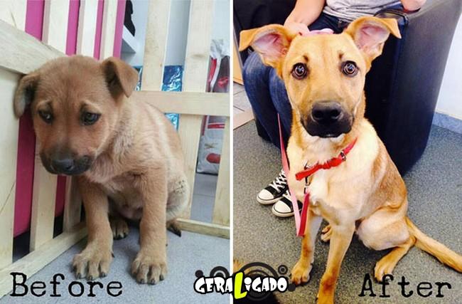 Animais antes e depois de serem adotados3
