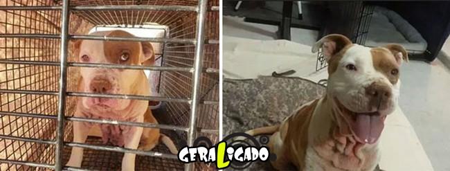 Animais antes e depois de serem adotados5