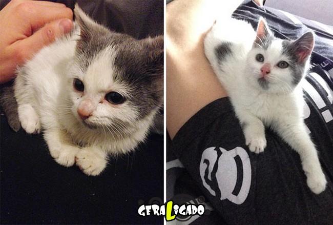 Animais antes e depois de serem adotados6