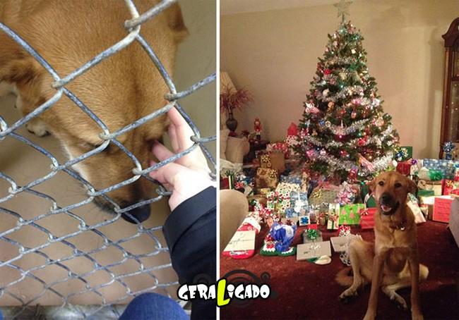 Animais antes e depois de serem adotados7