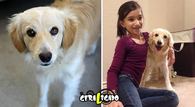Animais antes e depois de serem adotados8