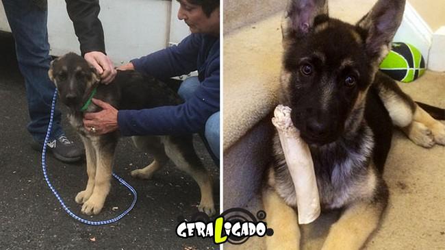 Animais antes e depois de serem adotados9