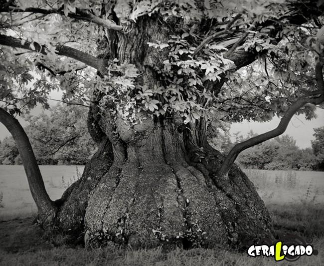 As  árvores mais raras e antigas do mundo14