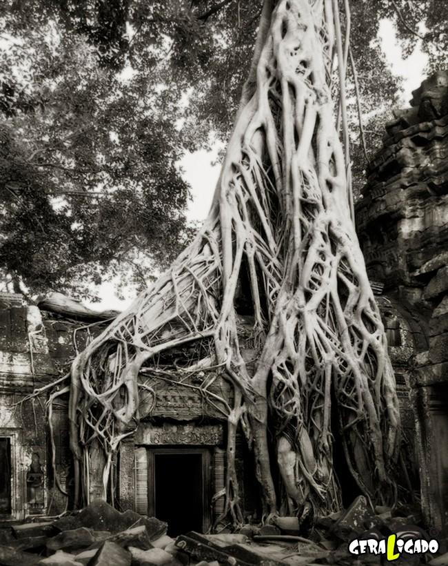 As  árvores mais raras e antigas do mundo3