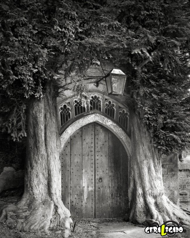 As  árvores mais raras e antigas do mundo4