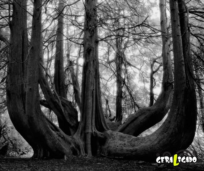 As  árvores mais raras e antigas do mundo9