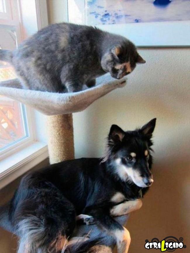 Cachorros que pensam que são gatos10