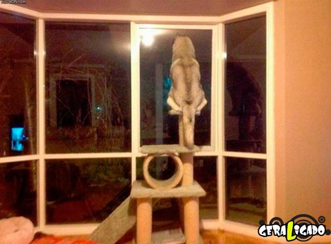 Cachorros que pensam que são gatos15