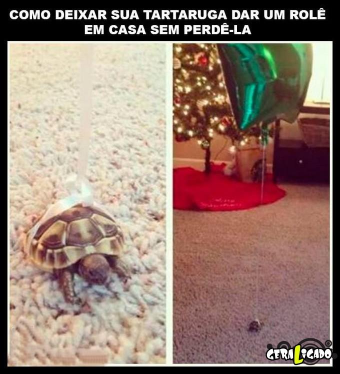 3 Como deixar sua tartaruga dar um role